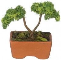 § Disc. $2 Off - Dollhouse Bonsai in Tray - Product Image