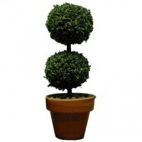 Dollhouse Large Round Topiary - Product Image