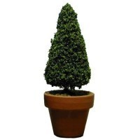 Dollhouse Large Fir Topiary - Product Image