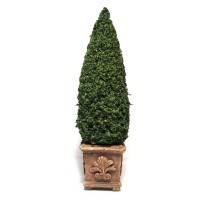 Dollhouse 6 in. Topiary - Square Pot - Product Image