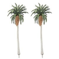 Date Palm Trees - Product Image