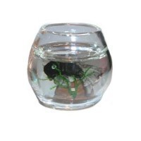 § Sale .60¢ Off - Dollhouse Filled Fish Bowl - Product Image
