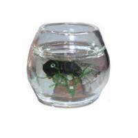 § Damaged $3 Off - Filled Fish Bowl - Product Image