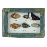 § Disc. $1 Off - Dollhouse Framed Seashell Collection - Product Image