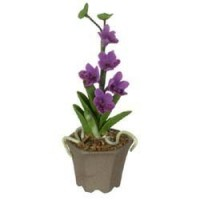 § Sale $1 Off - Assorted Dollhouse Potted Orchids - Product Image