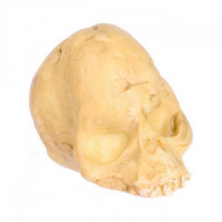 (*) Dollhouse Partial Skull - Product Image