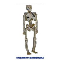 Sale - Dollhouse Skeleton - Product Image