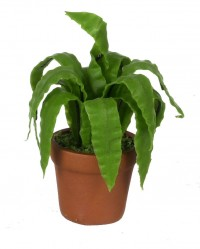 § Disc. $2 Off - Dollhouse Bird's Nest Fern in Pot - Product Image