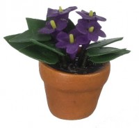 § Sale .60¢ Off - Dollhouse Purple African Violet - Product Image