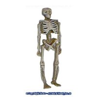 (*) Dollhouse Small Skeleton - Product Image