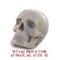 Sale - Dollhouse Miniatures Skull - Product Image