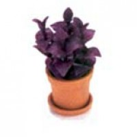 § Sale .70¢ Off - Dollhouse Purple Leaf Plant - Product Image