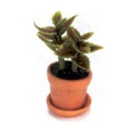 § Disc $2 Off - Dollhouse Green House Plant - Product Image