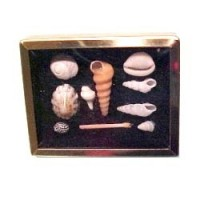 § Sale $1.50 Off - Dollhouse Shadow Box with Shells - Product Image