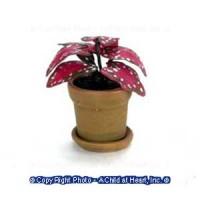 § Sale .70¢ Off - Dollhouse Red Caladium Plant - Product Image