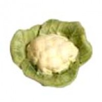 Dollhouse Garden Fresh Cauliflower - Product Image