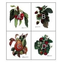 Dollhouse Fruit Kitchen Prints - Product Image