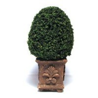 Dollhouse 4-1/2 in. Topiary - Square Pot - Product Image