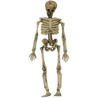 (*) Dollhouse Miniature Skeleton - Product Image