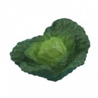 § Sale .60¢ Off - Head of Green Cabbage - Product Image