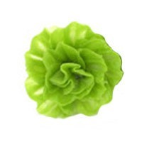 1 or 6 or 12 pc Dollhouse Garden Fresh Lettuce - Product Image